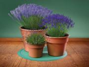 Подставка под елку или домашние растения напольная универсальная, темно-зеленый (WeatherTech) фото, цена