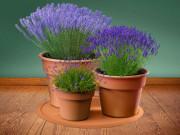 Подставка под елку или домашние растения напольная универсальная, терракотовый (WeatherTech) фото, цена
